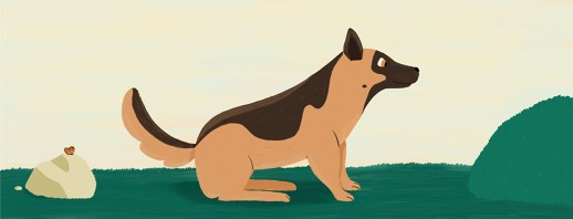 5 Narcolepsy Service Dog Basics image